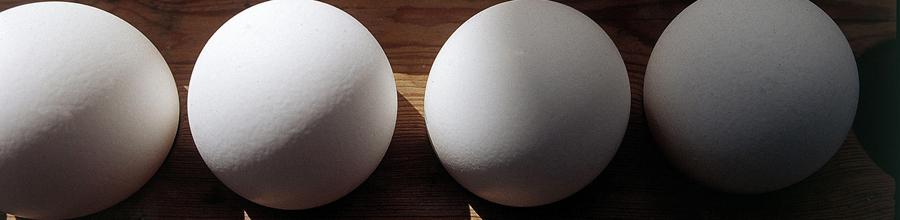 Äggbild
