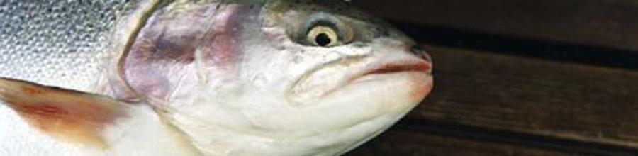 fisksnoddny