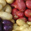 potatiscurry_dewis
