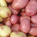 potatisrecept_alltiett